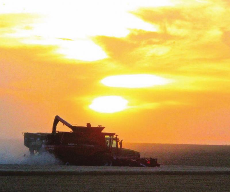 Wheat harvest far from great, but overall quality still a surprise