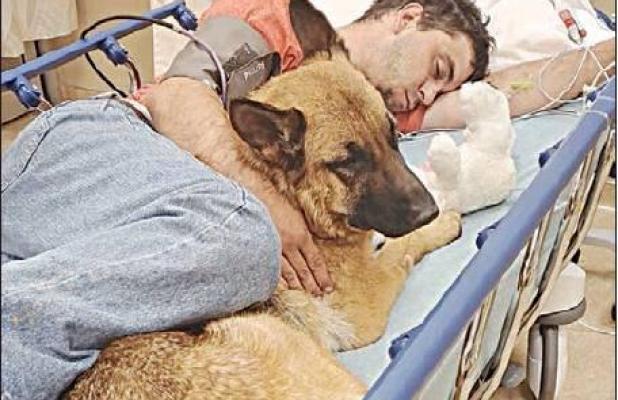 Dog attacks revive 'potentially dangerous'debate